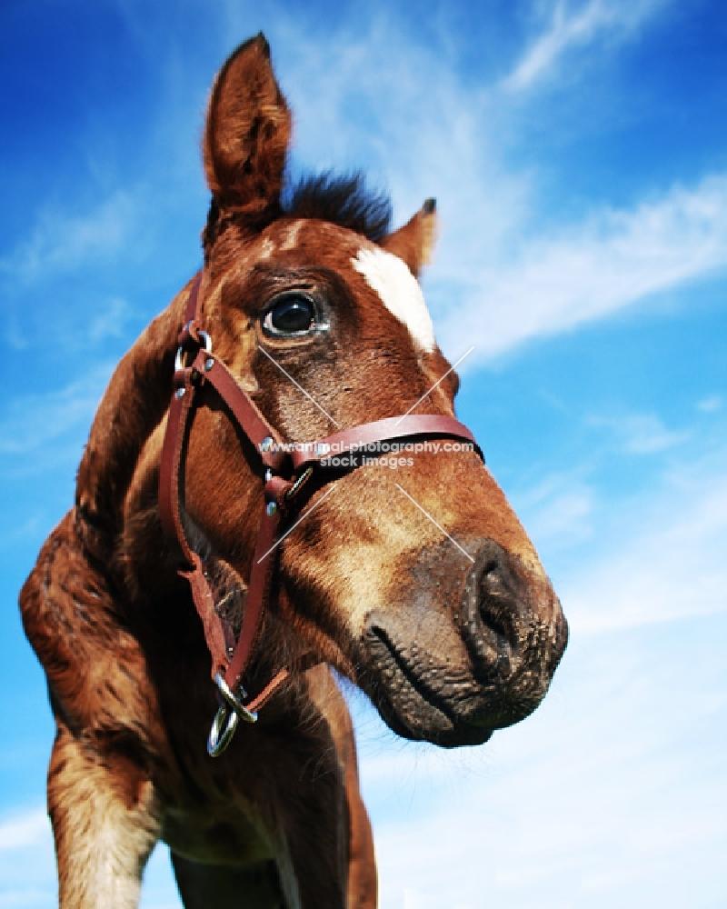 Foal on blue sky