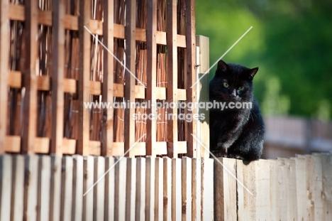 alert cat sitting on fence