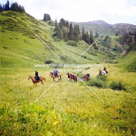six kirghiz horses in Kyrgyzstan