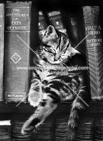 cute tabby kitten sleeping with old books