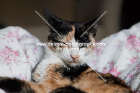 Grey cat sleeping on flowery patterned duvet