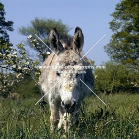 donkey gazing into camera