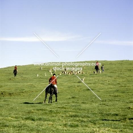 vale of aylesbury hunt, riders, walker, hounds