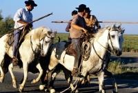 Picture of bandido, gardiens escorting bull to games on road near les saintes marie de la mer, camargue ponies