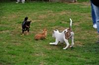 Picture of behaviour, three dogs, puppy school,