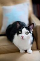 Picture of bi-coloured cat staring at camera