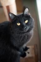 Picture of black cat sitting