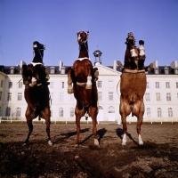 Picture of cadre noir de saumur, france, 3 horses rearing