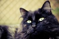 Picture of cat portrait