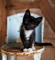 Picture of cute farm kitten on stool