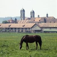 Picture of Eindiedler in pasture at  Einsiedeln Monastery