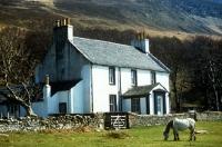 Picture of eriskay pony beside cottage on holy island, scotland