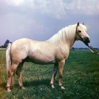 Picture of Estonian Klepper