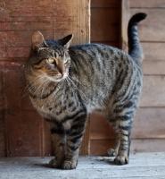 Picture of farm cat