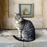 Picture of feral x cat, ben, at cat door