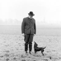 Picture of german hunt terrier, ger ch ethel vom alderhorst, looking up at her owner