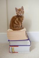 Picture of ginger kitten sitting on books