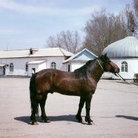 Picture of Huzel pony