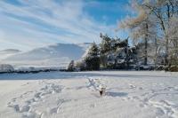 Picture of Jack Russell Terrier walking in snowy field