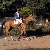 Picture of jockey riding akhal teke horse