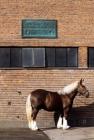 Picture of jutland horse at carlsberg brewery copenhagen