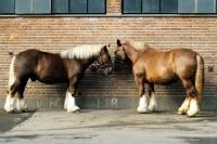 Picture of jutland horses at carlsberg brewery copenhagen
