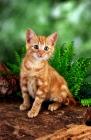 Picture of kitten amongst greenery