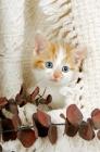 Picture of kitten in a blanket