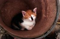 Picture of kitten in a bucket