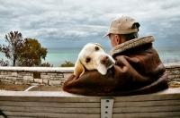 Picture of Labrador Retriever with man