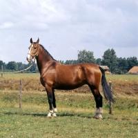 Picture of Larda, Gelderland mare champion
