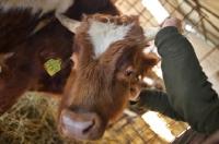 Picture of man grabbing bull's horns