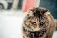 Picture of non pedigree cat outside in winter
