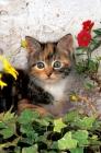 Picture of non pedigree kitten amongst flowers