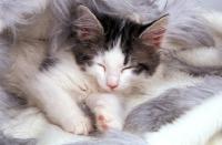 Picture of non pedigree kitten sleeping on rug