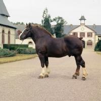 Picture of Notaire, Breton, trait postier Breton lourd