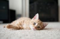 Picture of orange tabby kitten lying on side