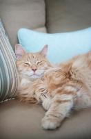 Picture of orange tabby sleeping