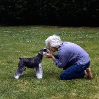 Picture of owner cuddling miniature schnauzer