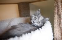 Picture of pastel torti kitten looking over shoulder