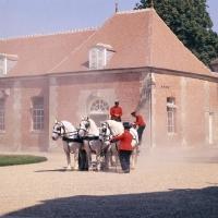 Picture of percheron horses in driving display at haras du pin