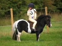 Picture of Piebald pony