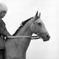 Picture of Polotli, akhal teke stallion with Turkmen rider
