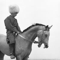 Picture of Polotli, famous akhal teke stallion with mouth open, eyes shut
