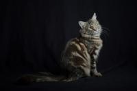 Picture of Portrait of Quadzilla's Taiji sitting, studio shot with black background