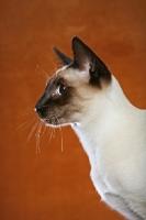 Picture of Thai Cat profile