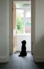 Picture of Tibetan terrier watching seagulls