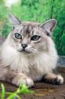 Picture of tiffanie portrait