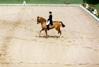 Picture of uwe schulten-baumer riding slibovitz, dressage at goodwood