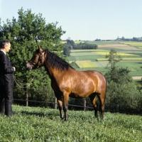 Picture of Wazka, Huzel pony in Poland